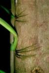 La survie ingénieuse des plantes tropicales