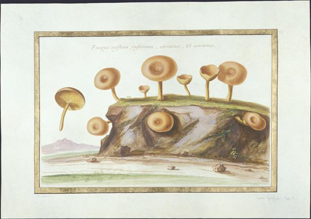 Dessiner les champignons au xviie si cle - Dessiner un champignon ...