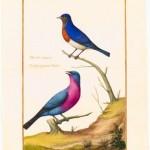 Beautés ornithologiques