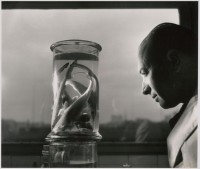 Le professeur Paul Budker contemplant des bébés requins. 1943 (c) Atelier Robert Doisneau
