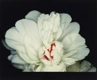 Fête des anges : scènes de sexe (Feast of Angels : Sex Scenes) 1992 © Nobuyoshi Araki / Courtesy Taka Ishii Gallery