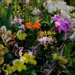 1001 orchidées