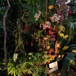 Grandes serres du jardin des Plantes