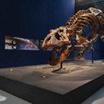Saison Paléontologie